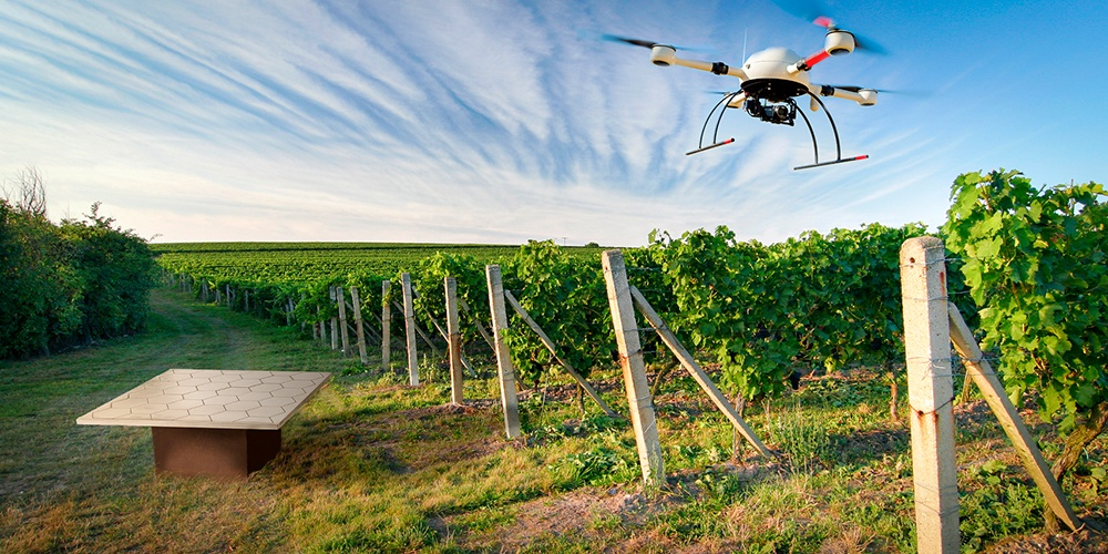 Drone hovering over a vineyard.